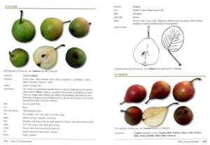 Extract from Pears of Gloucestershire by